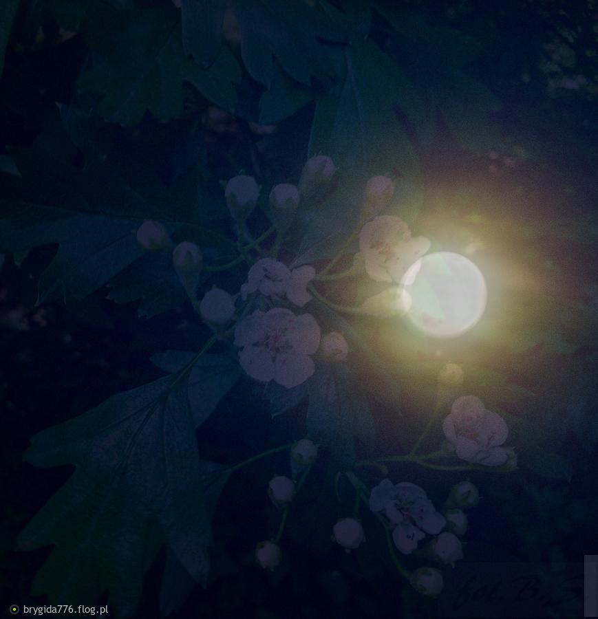 Tag: księżyc - Archiwum fotobloga brygida776 flog pl