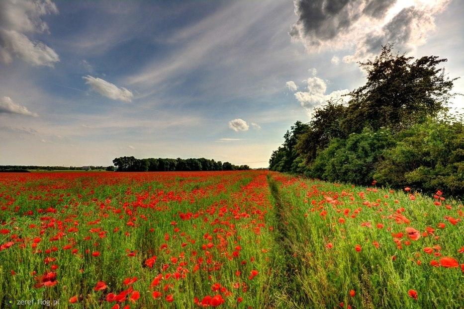 Bo najpiękniejsze są polskie kwiaty...