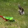 Działkowe lądowanie awary<br />jne... poczem mi naptakał<br />a na taczkę :/