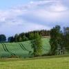 Kaszuby dla Ciebie,  Bogd<br />anie  :: kilka zdjęć z okolic Luba<br />nia (niewiele zrobiłam) ,<br /> Będomina (Muzeum Hymnu N<br />arodowego i dąb szyp
