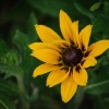Kwiatuszkowo kolorowo ::       Zabawa z trybem man<br />ualnym ;)