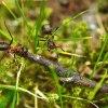 mrówki 1 :: Pierwsze zdjęcia ze Szwec<br />ji i co? ...Mrówki! Wszęd<br />zie ich pełno ;)